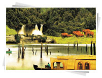 Gods Own Country Kerala Tours